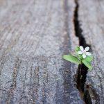 Omgaan met onrust – Martijn van Leerdam