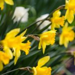 De troost van de lente – Johan Visser