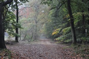 Herfst – Herman Koetsveld